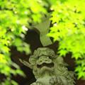 Photos: 新緑もみじ狩り