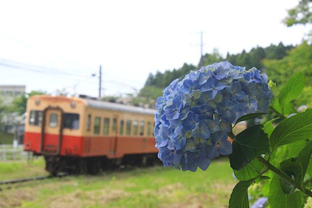 鉄路に咲く花