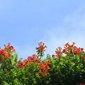 Photos: Orange In The Sky