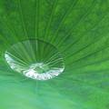 Photos: 緑盆