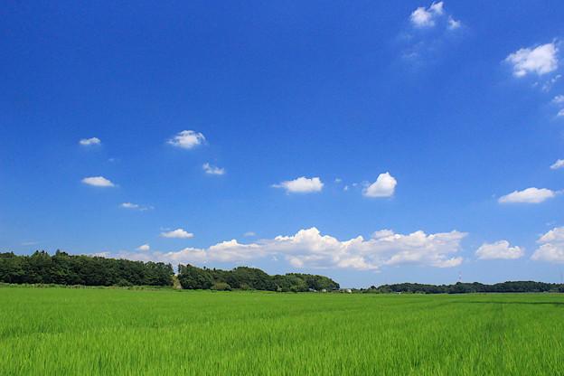 Photos: 北総の夏