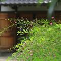 Photos: 萩寺