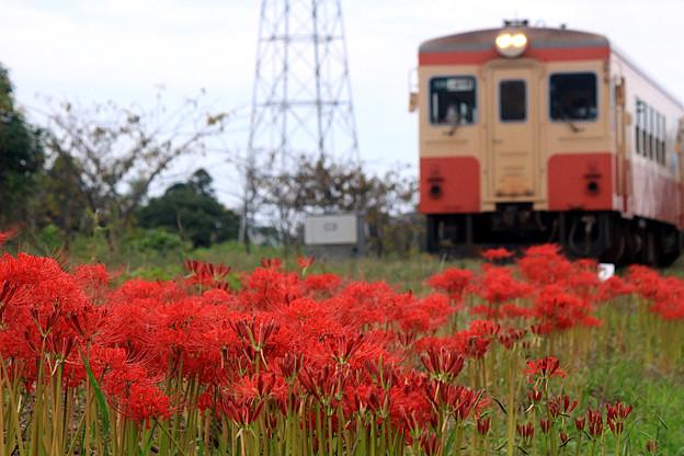 初秋の鉄路