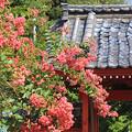 Photos: 初秋の山門