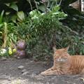 墓を守る猫