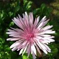 Photos: 花が咲く