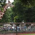 Shocking Giraffe