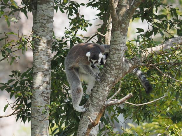 猿も木から降りる