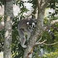 Photos: 猿も木から降りる