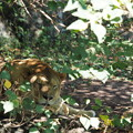 写真: 木陰の休息