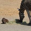 写真: 小さくて、食べたくて