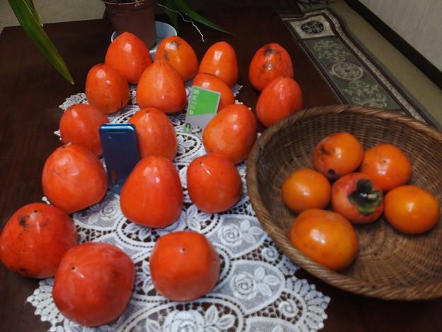 これが百匁柿です。