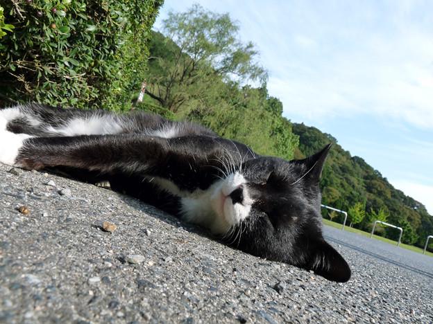 いわき市の猫