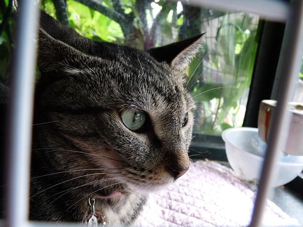 カフェ29猫(3)