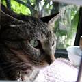 Photos: カフェ29猫(3)