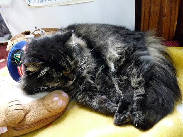 芦ノ牧温泉猫