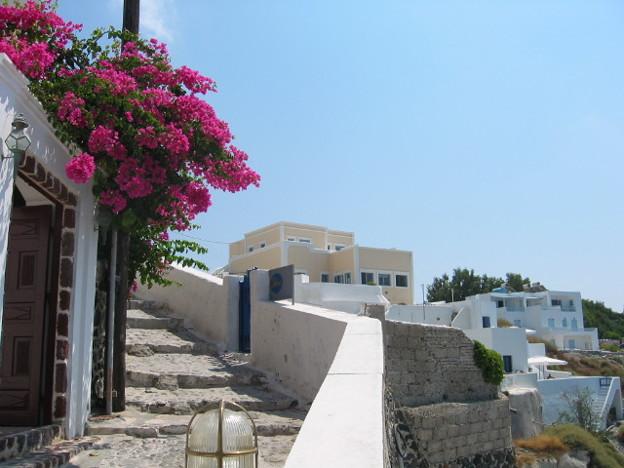 地中海の島の花