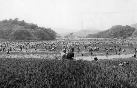 櫛津貝掘り 1961