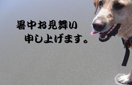 CIMG939暑中見舞い用 kuro