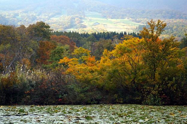 紅葉のいもり池