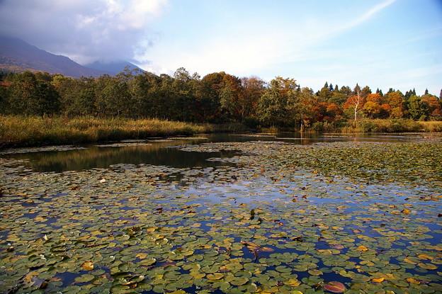 蓮のいもり池