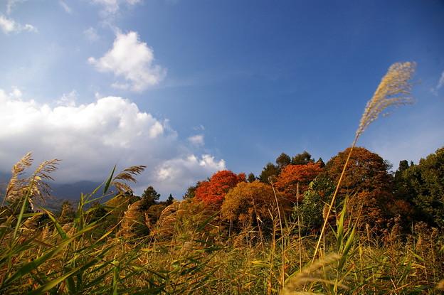 高原を渡る秋の風