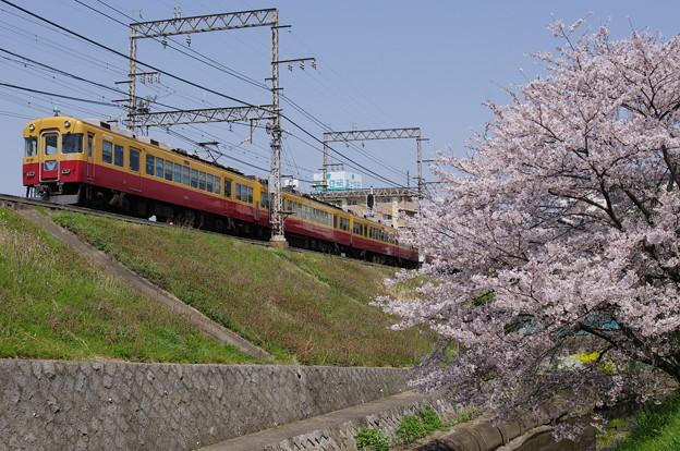 京阪旧3000系と桜