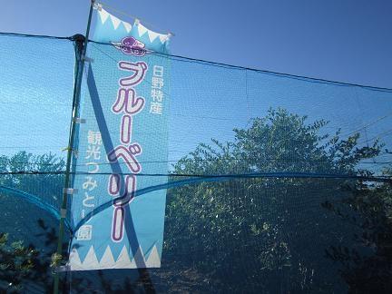 日野でブルーベリー摘み 2012