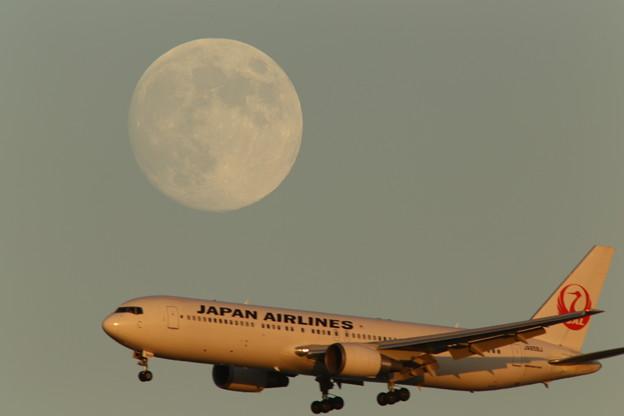 小望月と夕日を浴びるJAL機 2013-09-18
