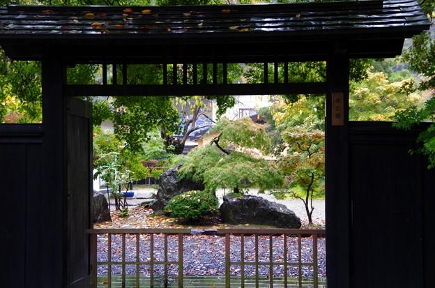 写真00057 素晴らしいお庭が