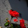 Photos: IMG_3770