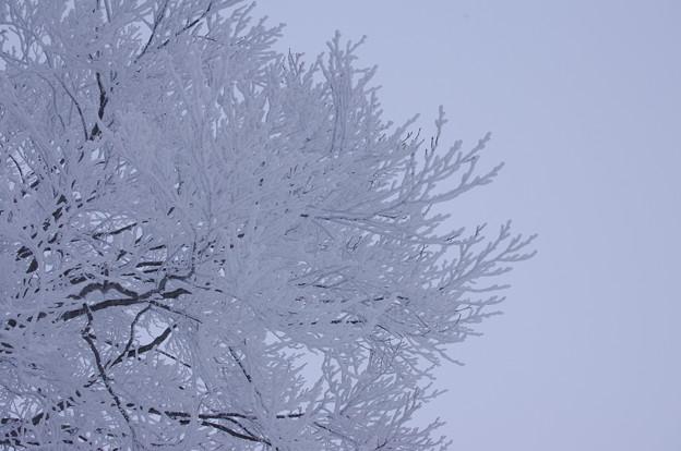 写真: 雪の華