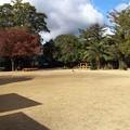 写真: 宝塚ガーデンフィールズ13122404