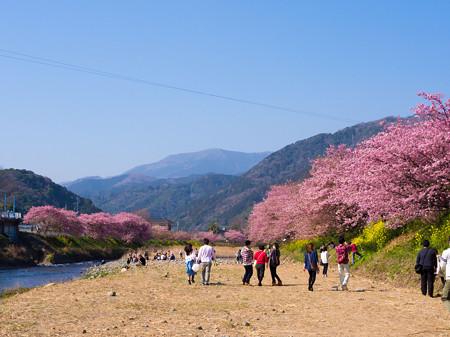 2013/3/9 河津桜まつり その3