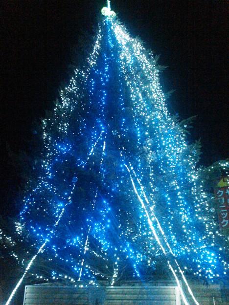 写真: アクト青山スタジオのツリー。クリスマスが終わってもツリーだけは夜間ライトアップしてます