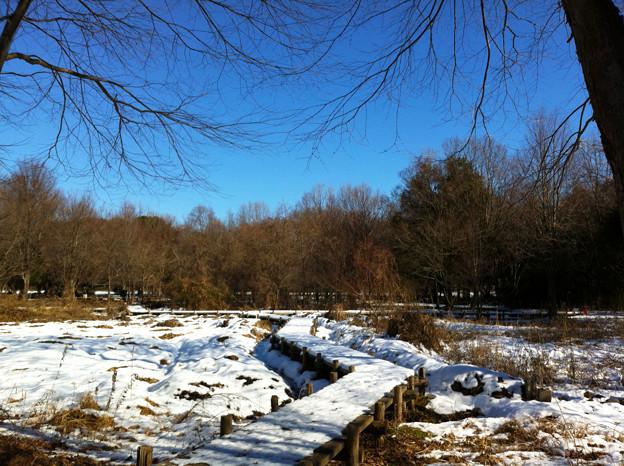 雪のM公園