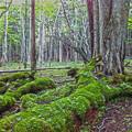 写真: 深い森