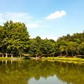 写真: 公園の池