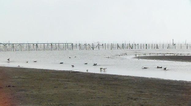 写真: 干潮の東京湾