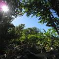 Photos: 青と緑#1/3@初夏の札幌藻岩山