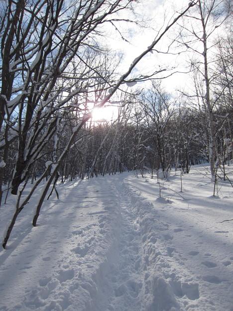 冬の山道@旭山記念公園