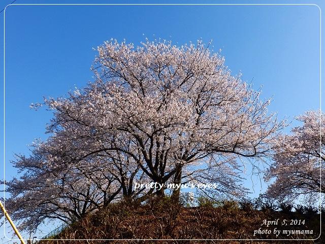 写真: s-026