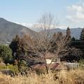Photos: 2月2日「薪となる樹」
