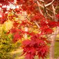 Photos: 秋ですね