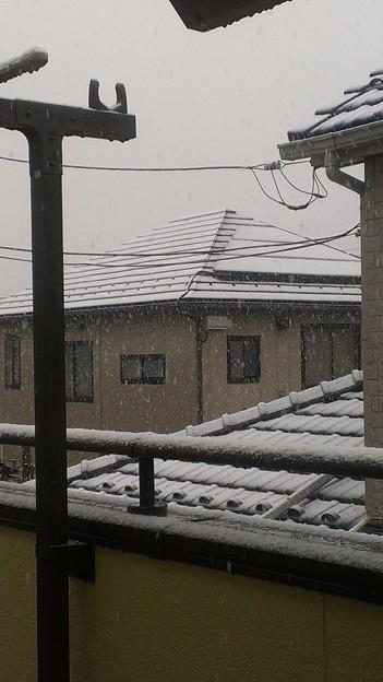 今年の初雪である。