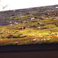Photos: 屋根上の小さな楽園