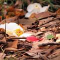 Photos: 森の彩り