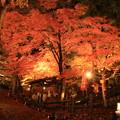Photos: 温泉寺紅葉ライトアップ02@下呂温泉