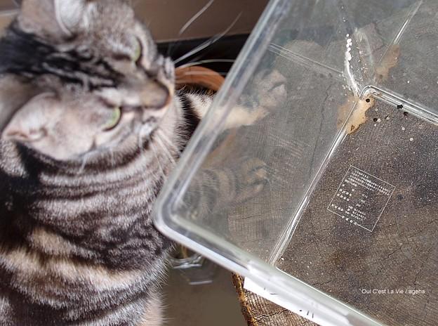 Photos: 色々ばっちくてスミマセン。(オオスカシバ飼育 鱗粉)