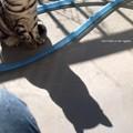 写真: 影も猫。
